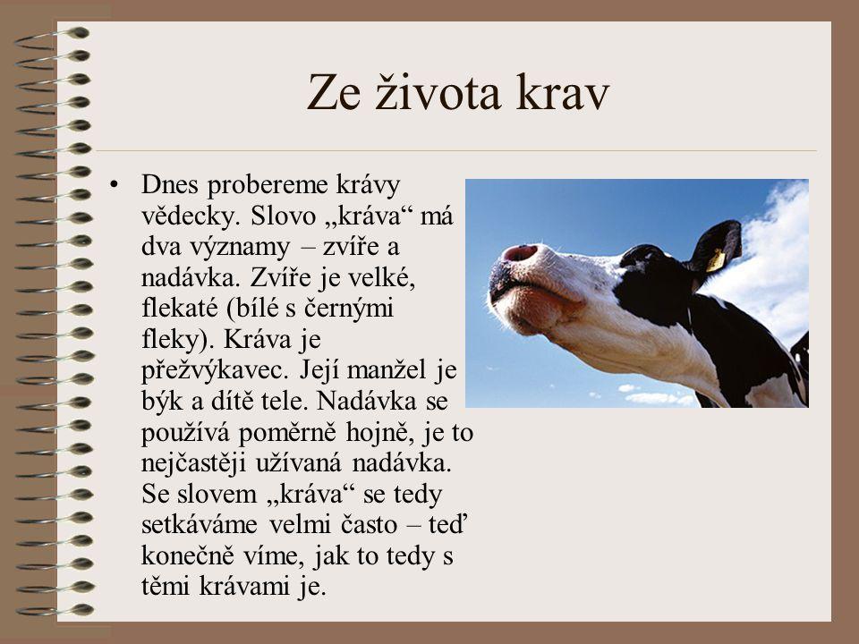 Ze života krav