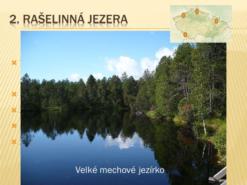 2. Rašelinná jezera vznikají v rašeliništích