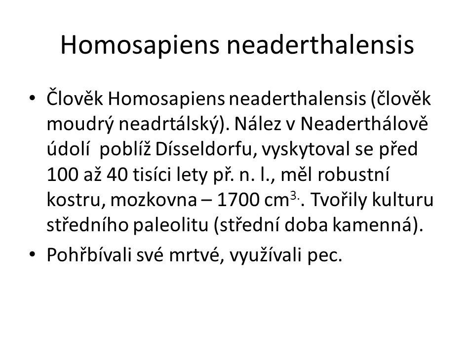 Homosapiens neaderthalensis