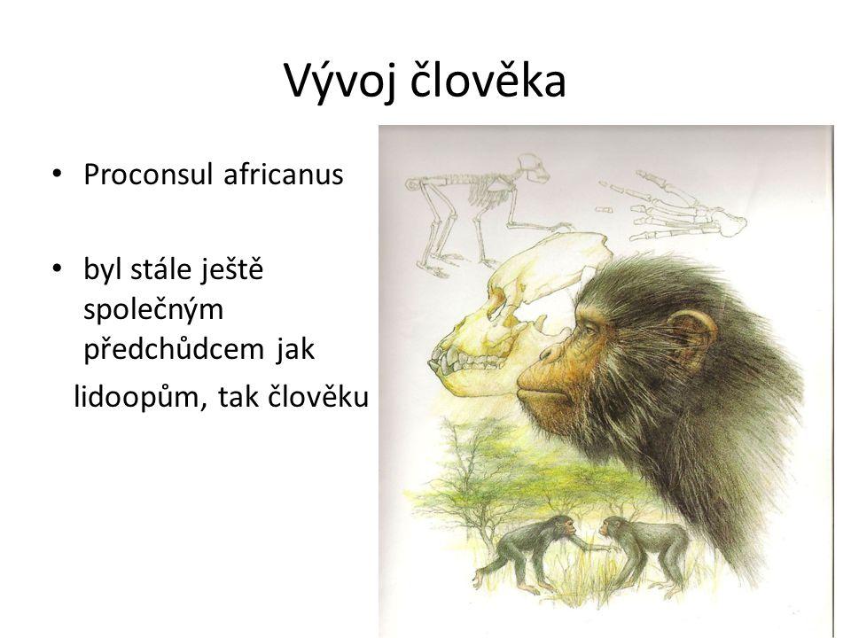 Vývoj člověka Proconsul africanus