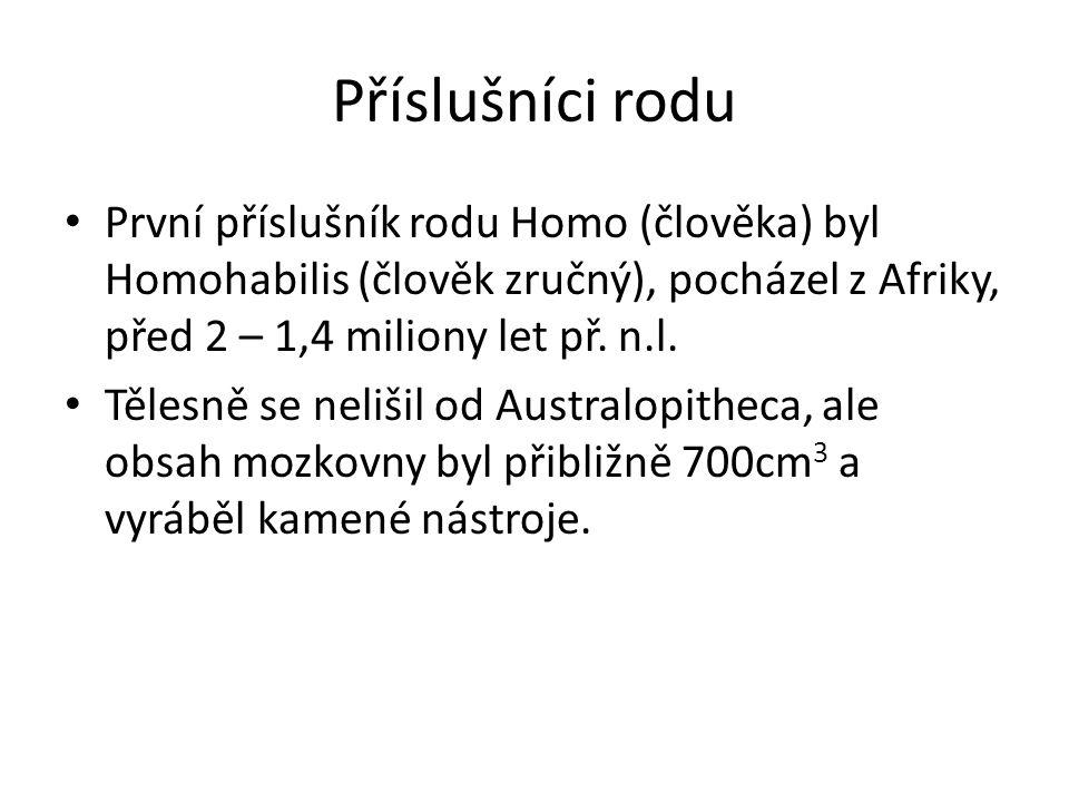 Příslušníci rodu První příslušník rodu Homo (člověka) byl Homohabilis (člověk zručný), pocházel z Afriky, před 2 – 1,4 miliony let př. n.l.