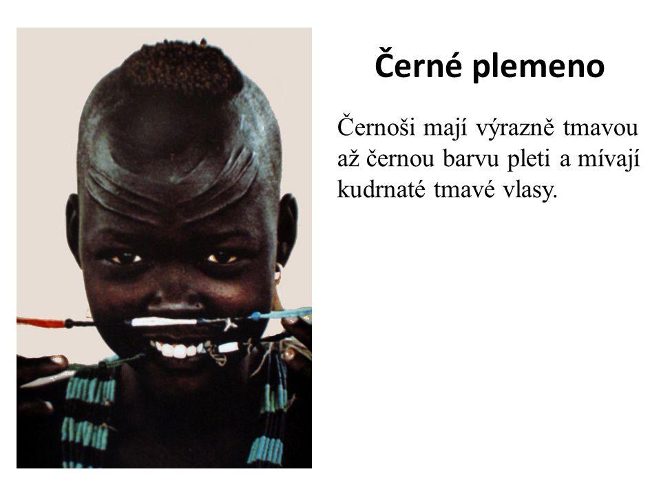 Černé plemeno Černoši mají výrazně tmavou až černou barvu pleti a mívají kudrnaté tmavé vlasy.