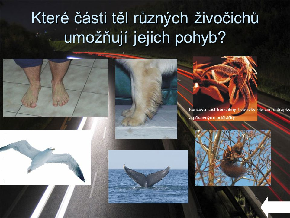 Které části těl různých živočichů umožňují jejich pohyb