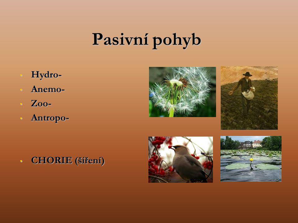 Pasivní pohyb Hydro- Anemo- Zoo- Antropo- CHORIE (šíření)
