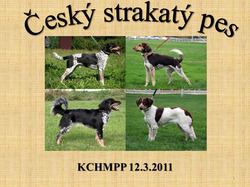 Český strakatý pes KCHMPP 12.3.2011
