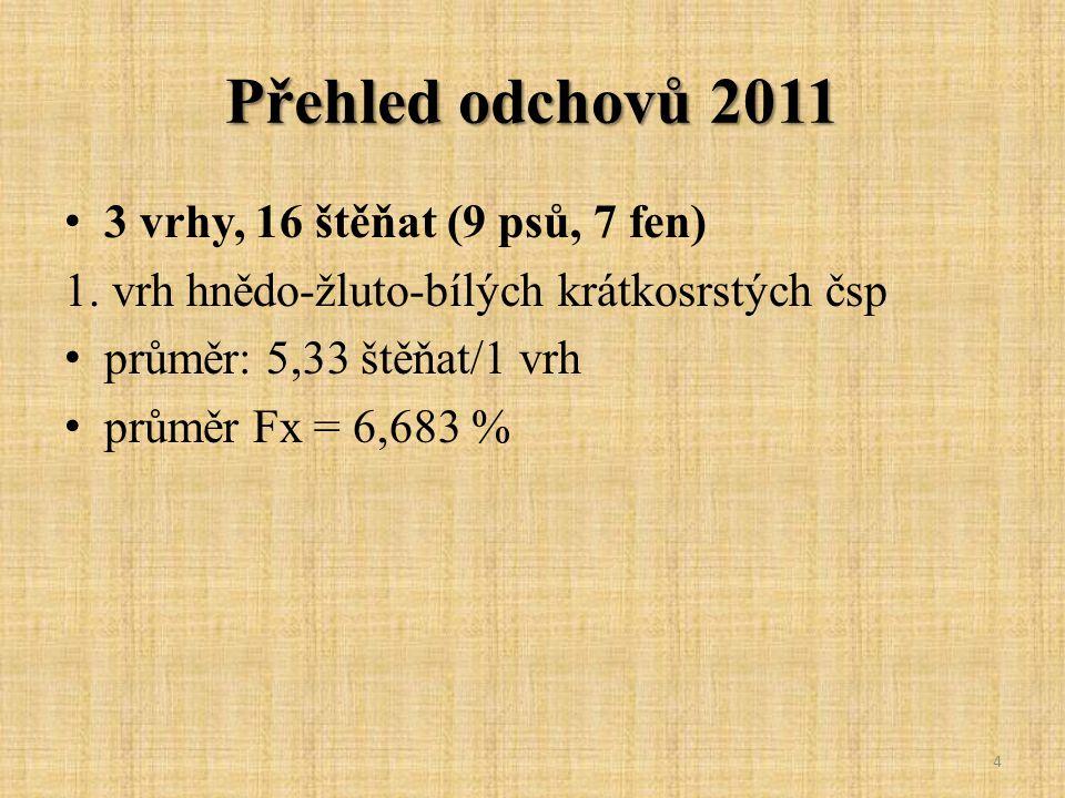 Přehled odchovů 2011 3 vrhy, 16 štěňat (9 psů, 7 fen)