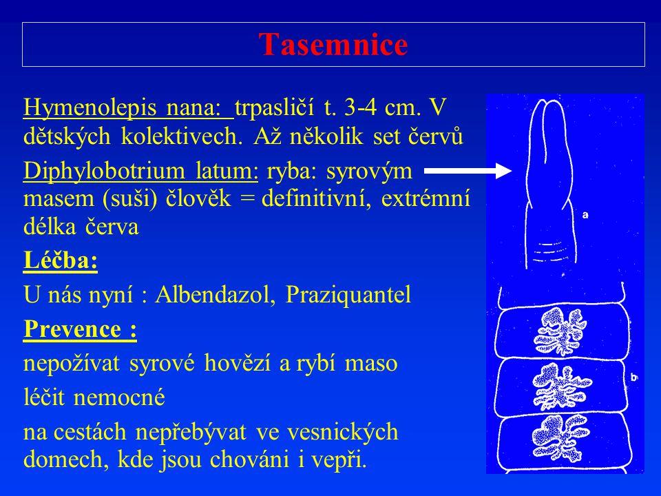 Tasemnice Hymenolepis nana: trpasličí t. 3-4 cm. V dětských kolektivech. Až několik set červů.