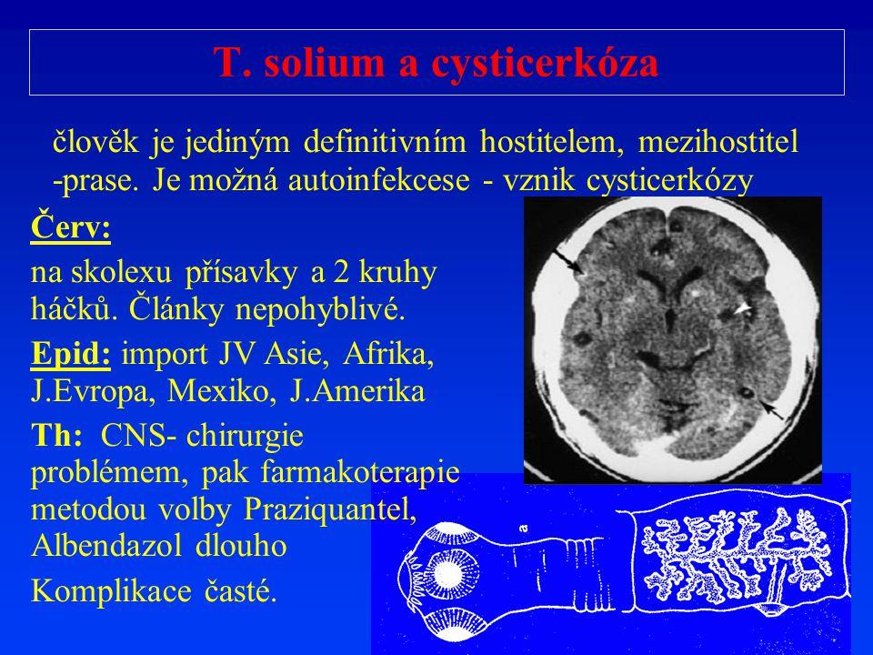 T. solium a cysticerkóza
