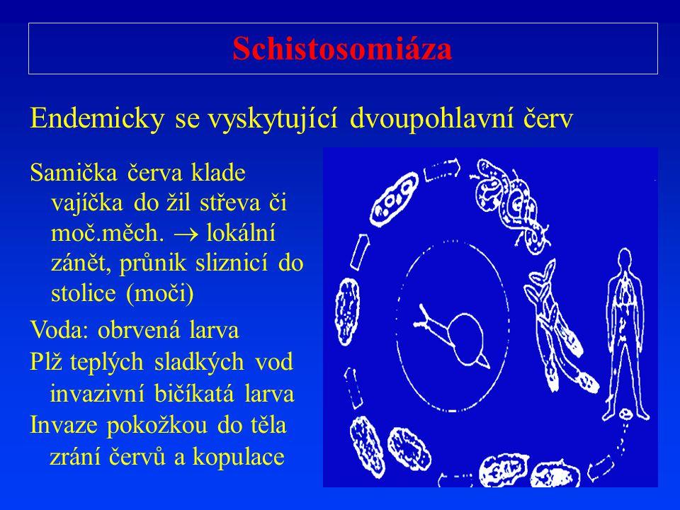 Schistosomiáza Endemicky se vyskytující dvoupohlavní červ