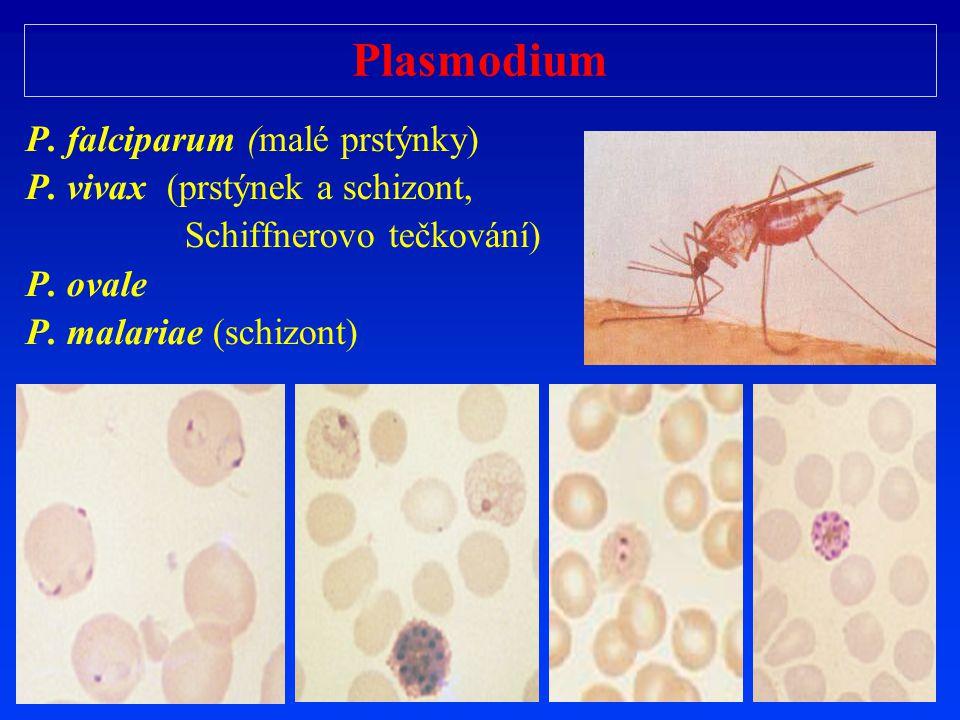 Plasmodium P. falciparum (malé prstýnky)