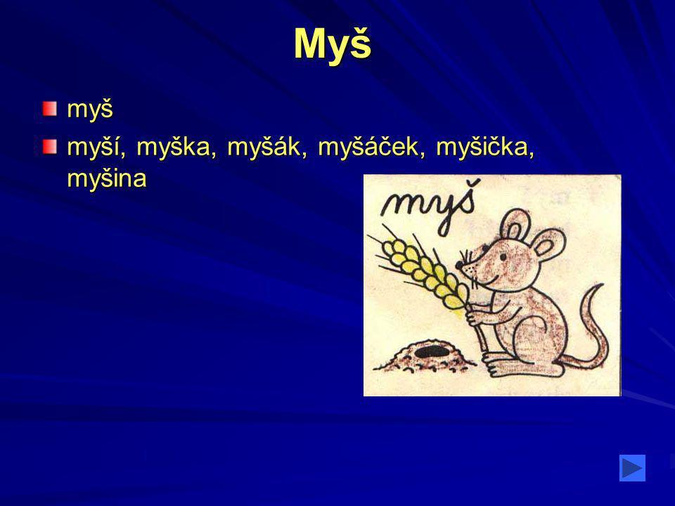 Myš myš myší, myška, myšák, myšáček, myšička, myšina
