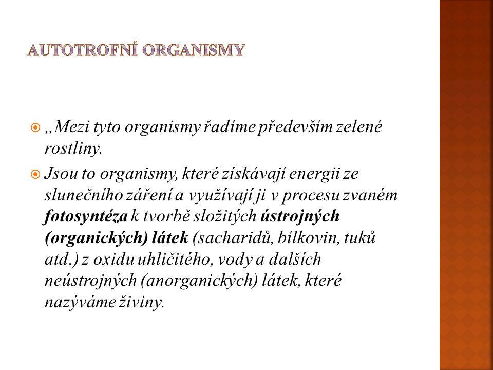 """""""Mezi tyto organismy řadíme především zelené rostliny."""
