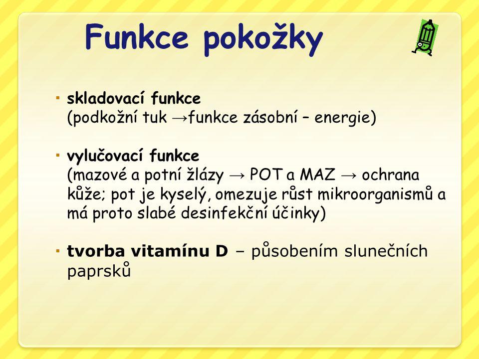 Funkce pokožky skladovací funkce (podkožní tuk →funkce zásobní – energie)