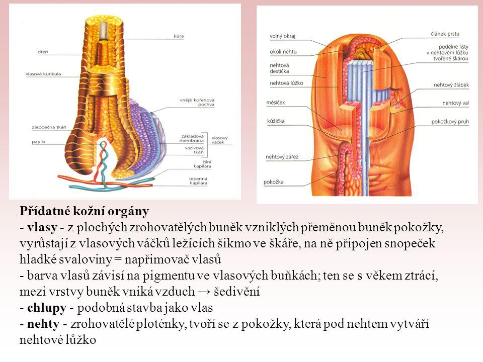 Přídatné kožní orgány