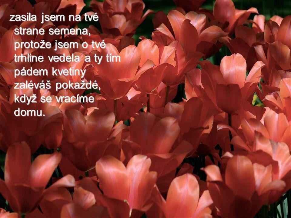 zasila jsem na tvé strane semena, protože jsem o tvé trhline vedela a ty tím pádem kvetiny zaléváš pokaždé, když se vracíme domu.