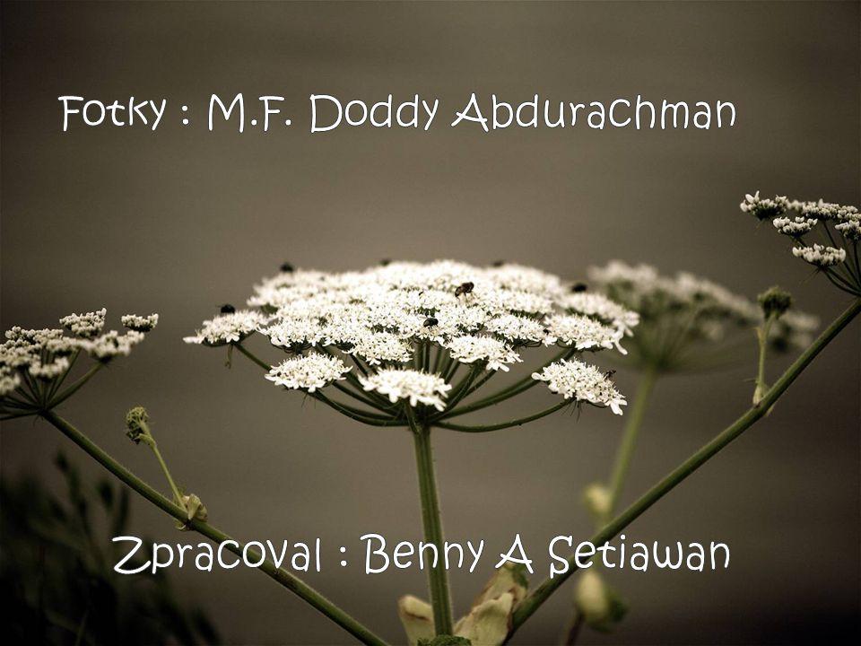 Fotky : M.F. Doddy Abdurachman