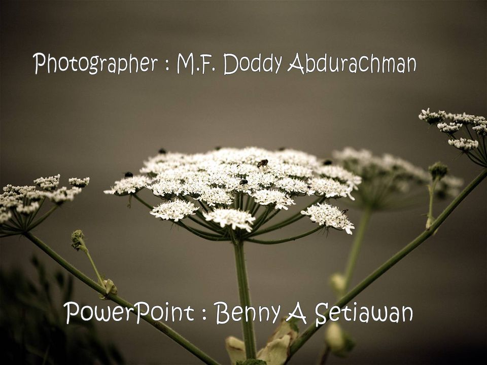 Photographer : M.F. Doddy Abdurachman