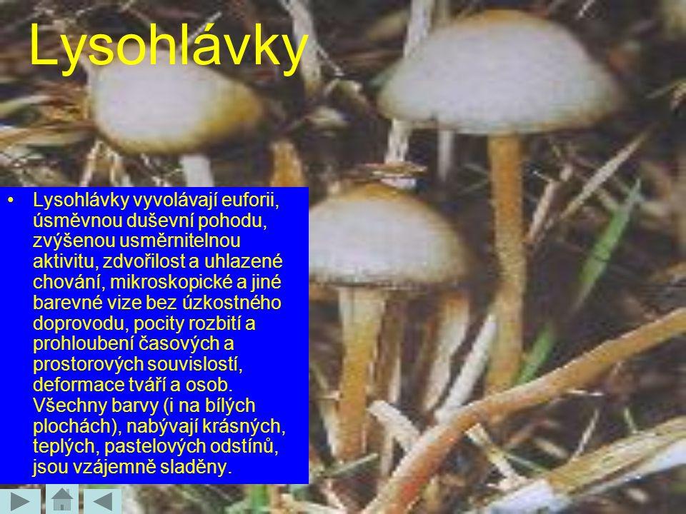 Lysohlávky
