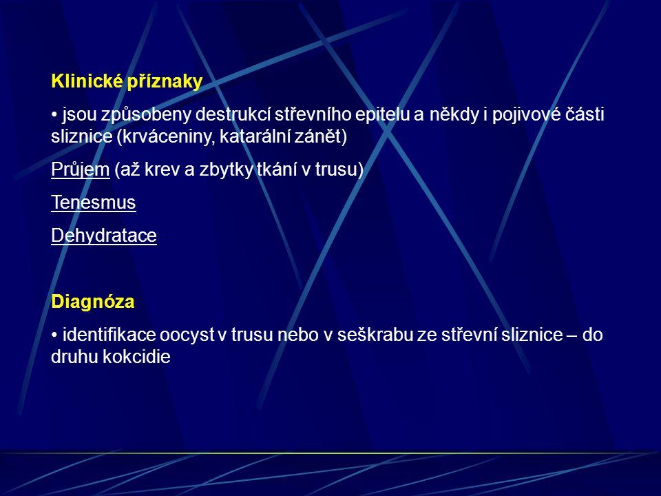 Klinické příznaky • jsou způsobeny destrukcí střevního epitelu a někdy i pojivové části sliznice (krváceniny, katarální zánět)