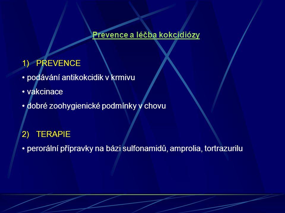 Prevence a léčba kokcidiózy