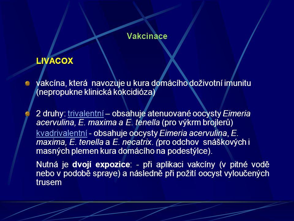 Vakcinace LIVACOX. vakcína, která navozuje u kura domácího doživotní imunitu (nepropukne klinická kokcidióza)