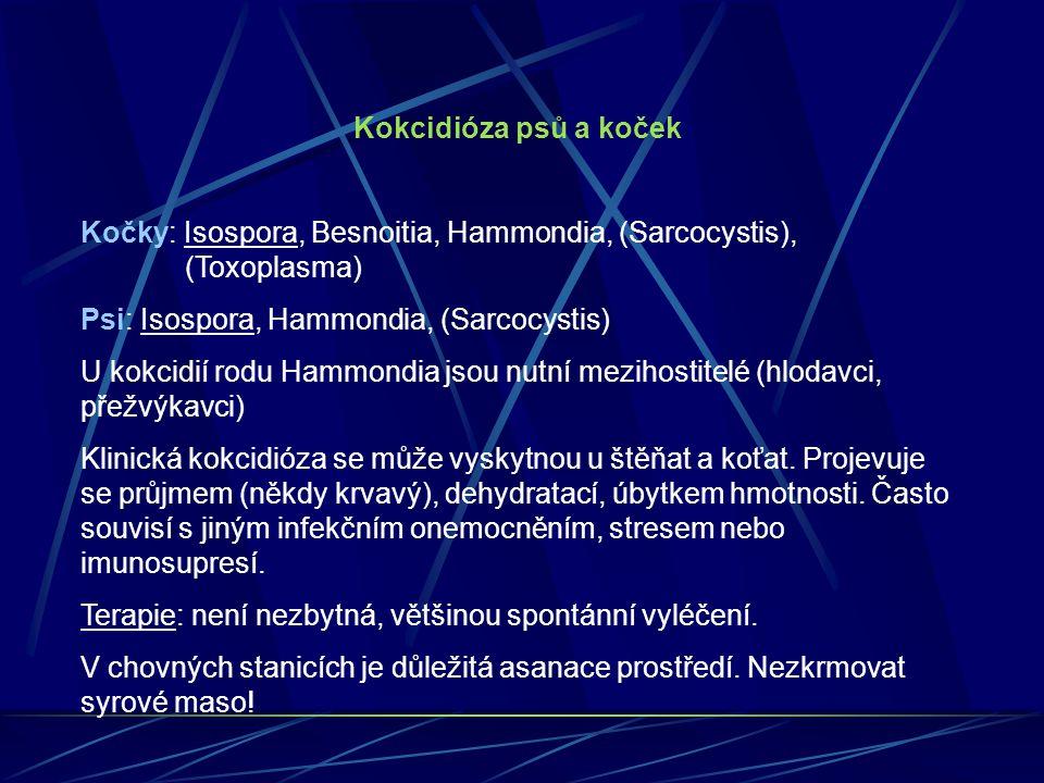 Kokcidióza psů a koček Kočky: Isospora, Besnoitia, Hammondia, (Sarcocystis), (Toxoplasma) Psi: Isospora, Hammondia, (Sarcocystis)