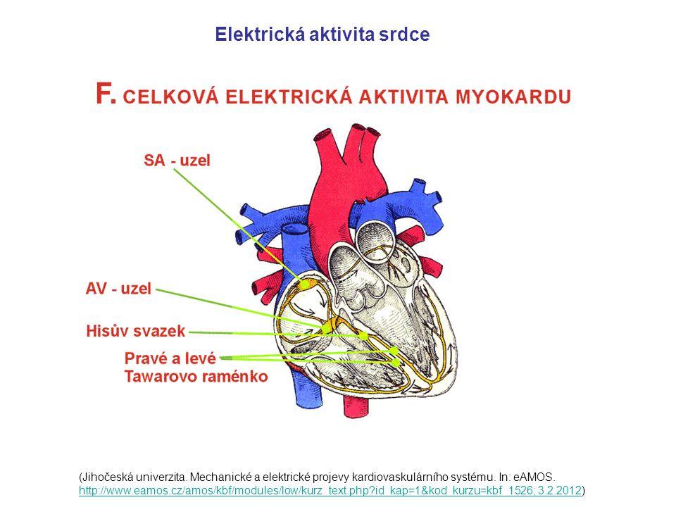 Elektrická aktivita srdce
