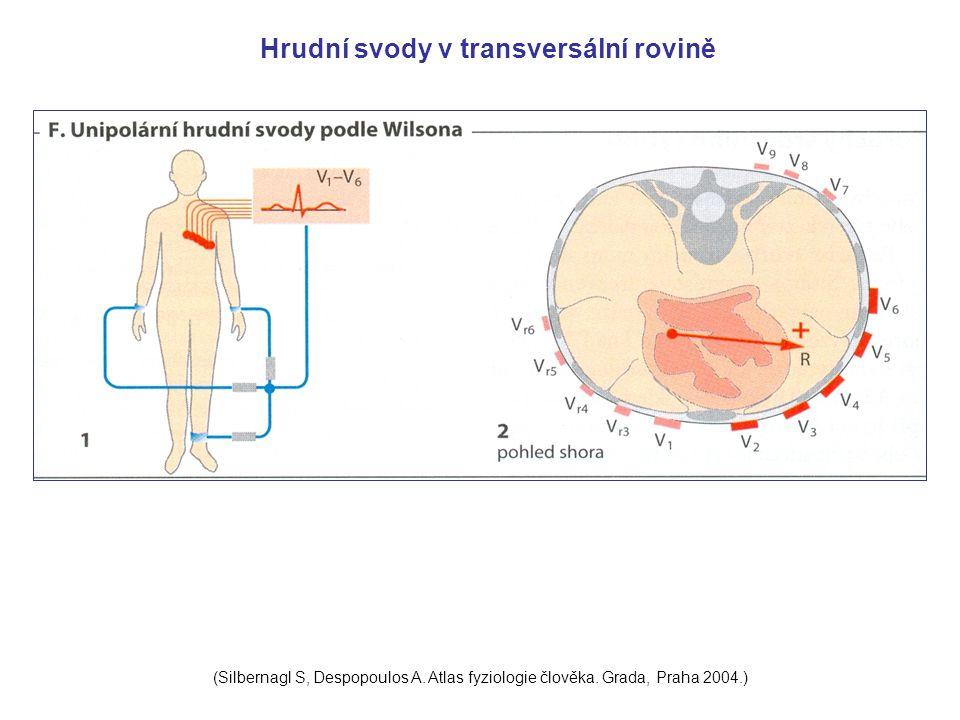 Hrudní svody v transversální rovině