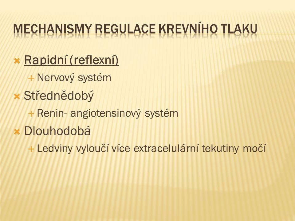 Mechanismy regulace krevního tlaku