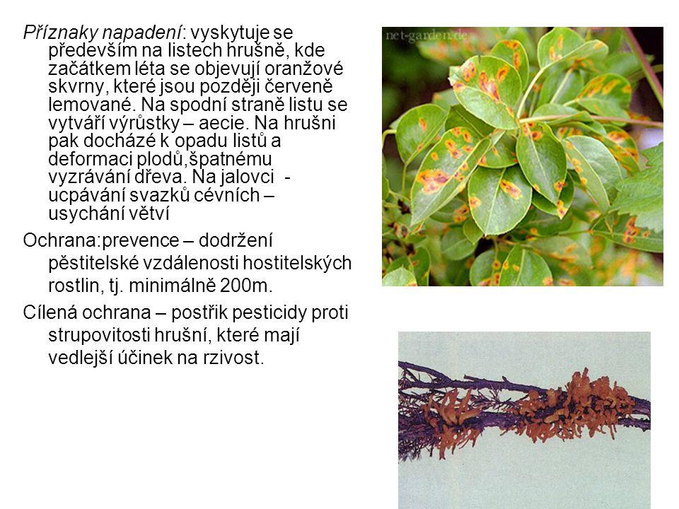 Příznaky napadení: vyskytuje se především na listech hrušně, kde začátkem léta se objevují oranžové skvrny, které jsou později červeně lemované. Na spodní straně listu se vytváří výrůstky – aecie. Na hrušni pak docházé k opadu listů a deformaci plodů,špatnému vyzrávání dřeva. Na jalovci - ucpávání svazků cévních – usychání větví