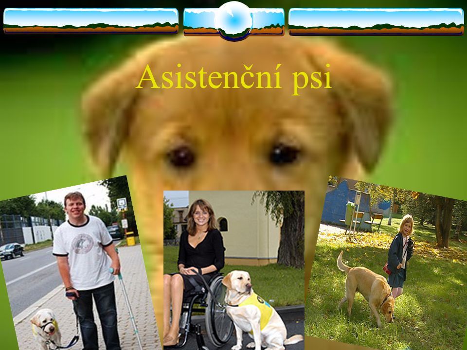 Asistenční psi