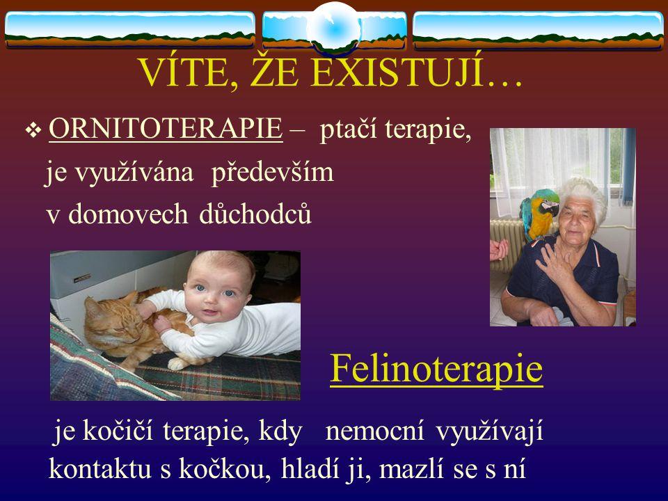 VÍTE, ŽE EXISTUJÍ… Felinoterapie