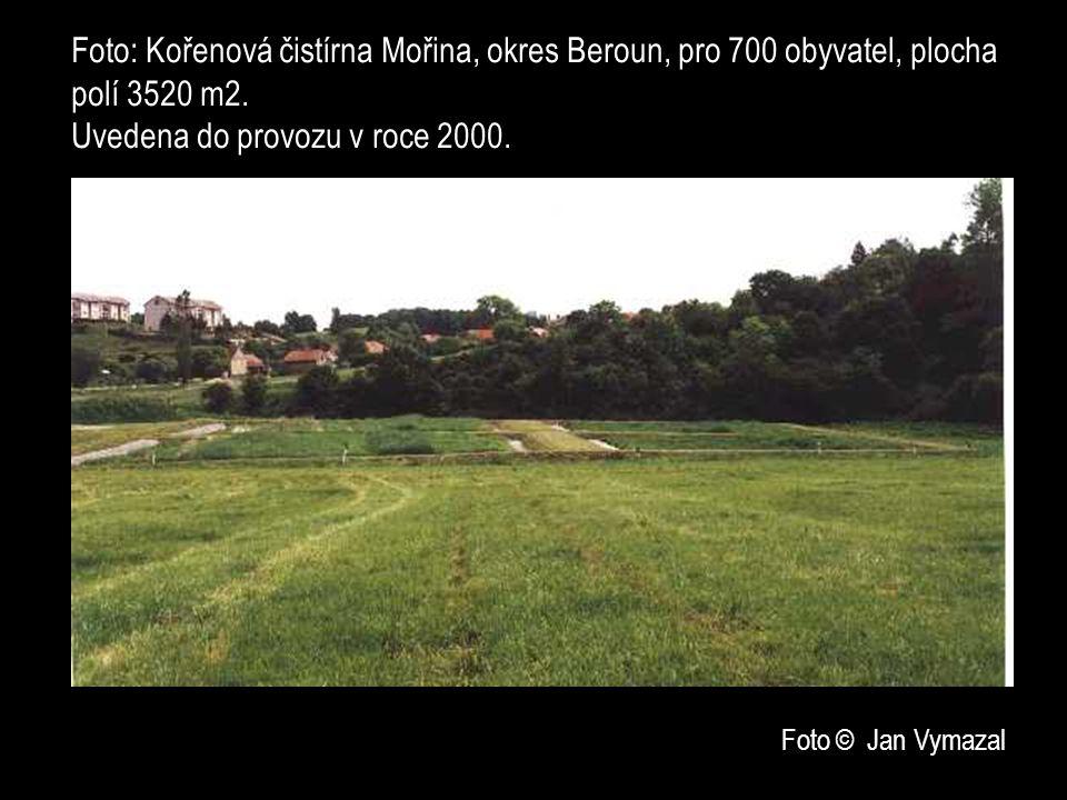 Foto: Kořenová čistírna Mořina, okres Beroun, pro 700 obyvatel, plocha polí 3520 m2. Uvedena do provozu v roce 2000.