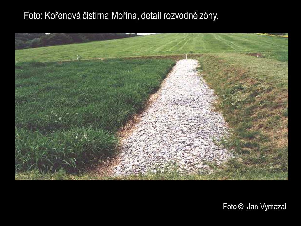 Foto: Kořenová čistírna Mořina, detail rozvodné zóny.