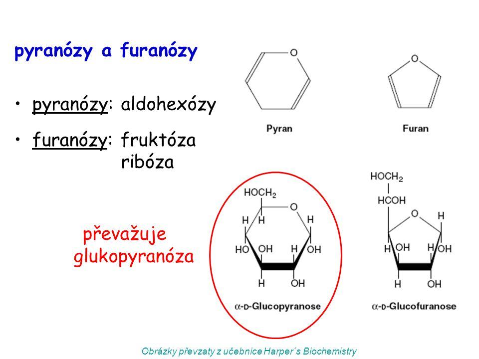 furanózy: fruktóza ribóza