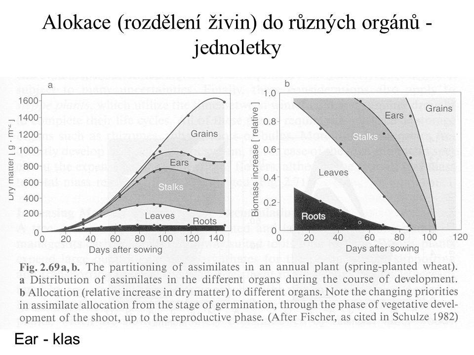 Alokace (rozdělení živin) do různých orgánů - jednoletky