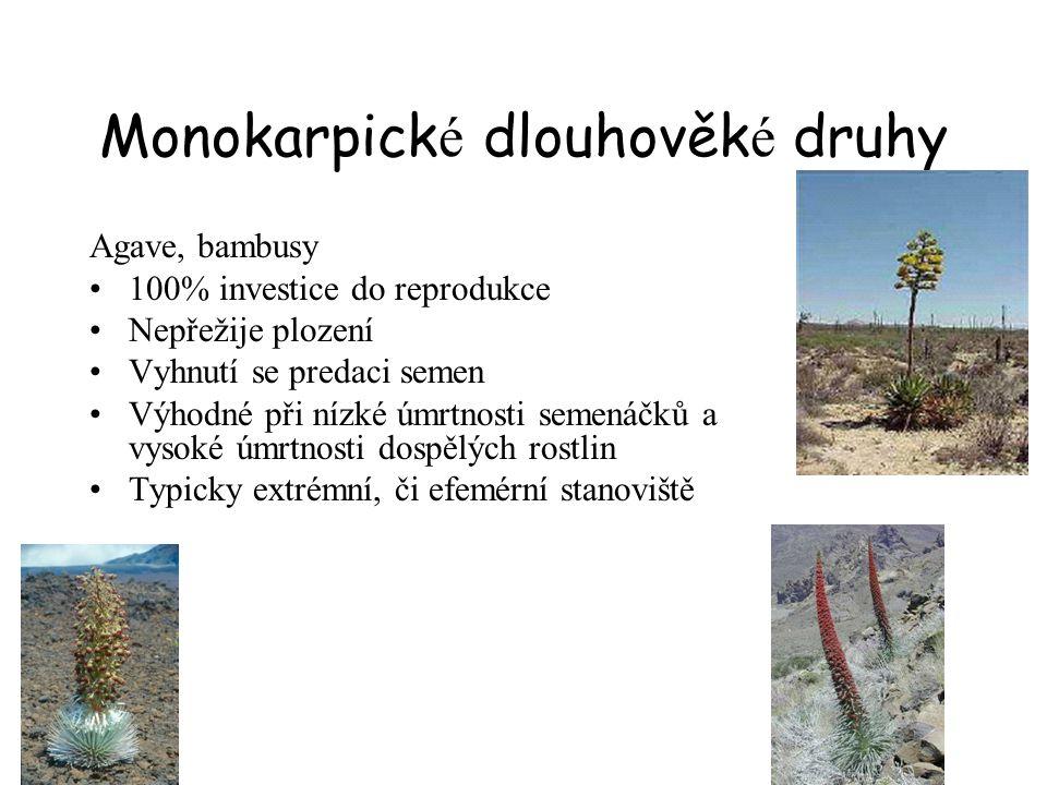 Monokarpické dlouhověké druhy