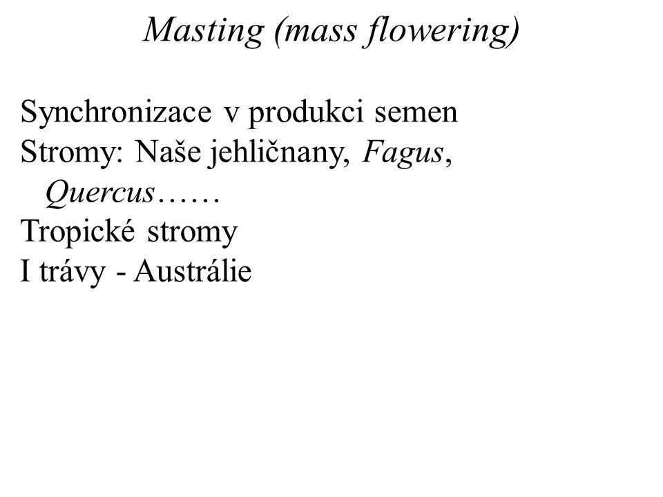Masting (mass flowering)