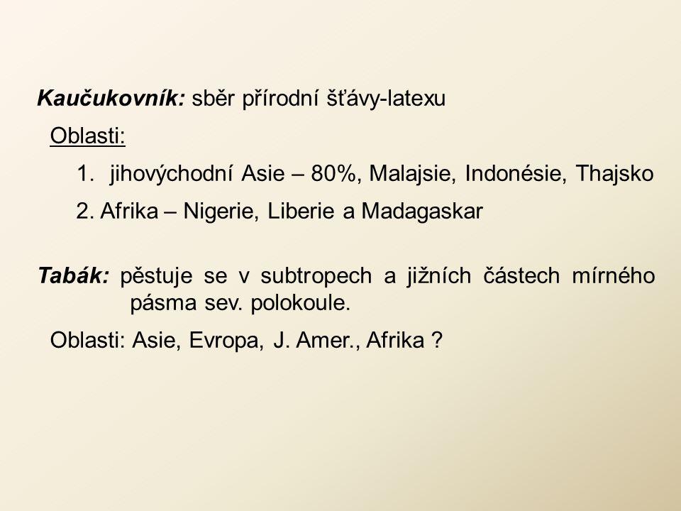 Kaučukovník: sběr přírodní šťávy-latexu