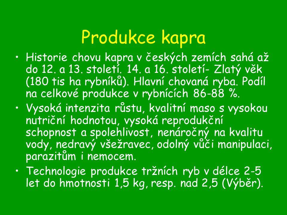 Produkce kapra