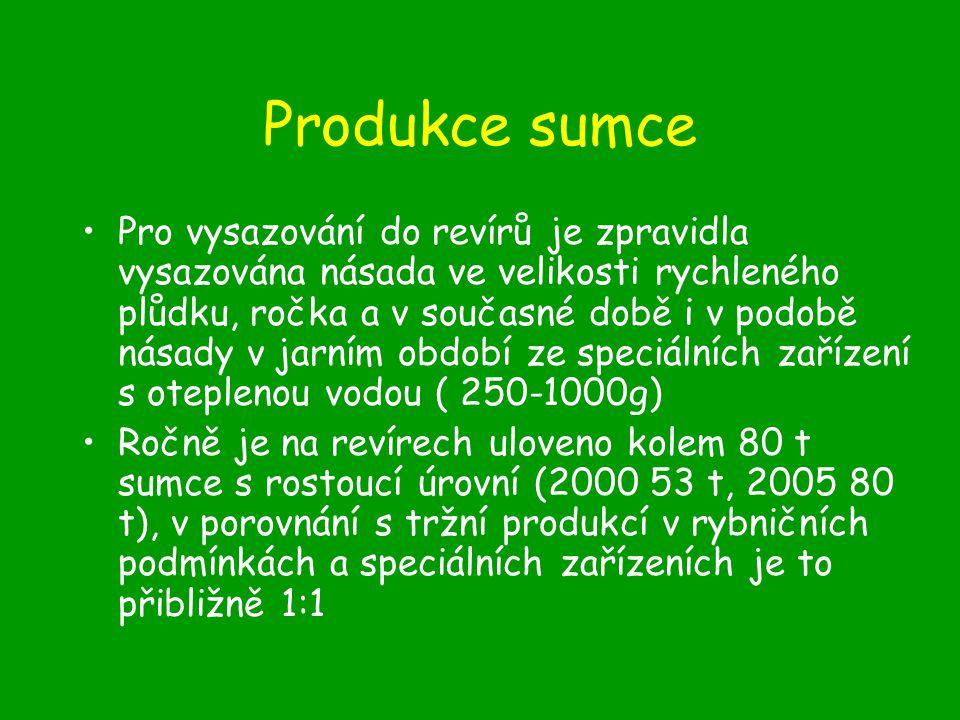 Produkce sumce
