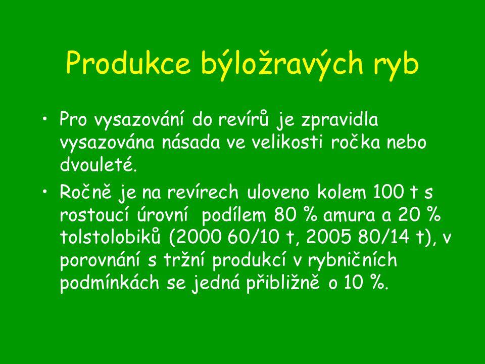 Produkce býložravých ryb
