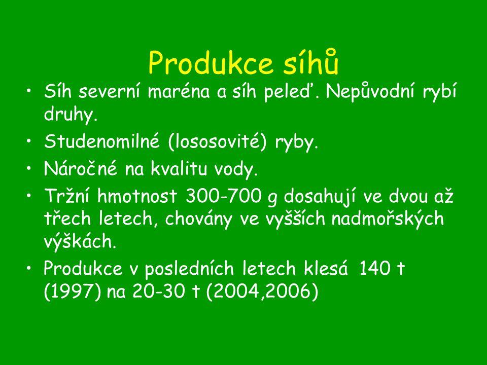 Produkce síhů Síh severní maréna a síh peleď. Nepůvodní rybí druhy.