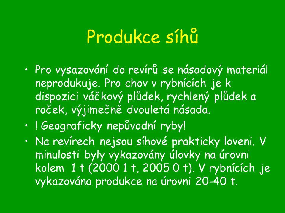 Produkce síhů