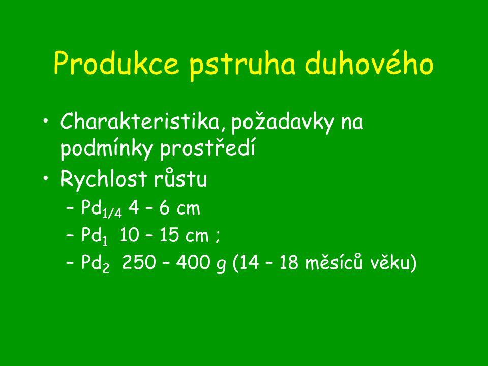 Produkce pstruha duhového