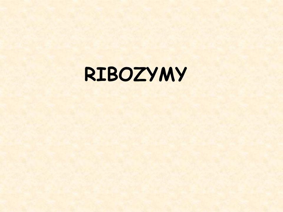 RIBOZYMY