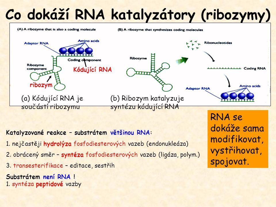 Co dokáží RNA katalyzátory (ribozymy)