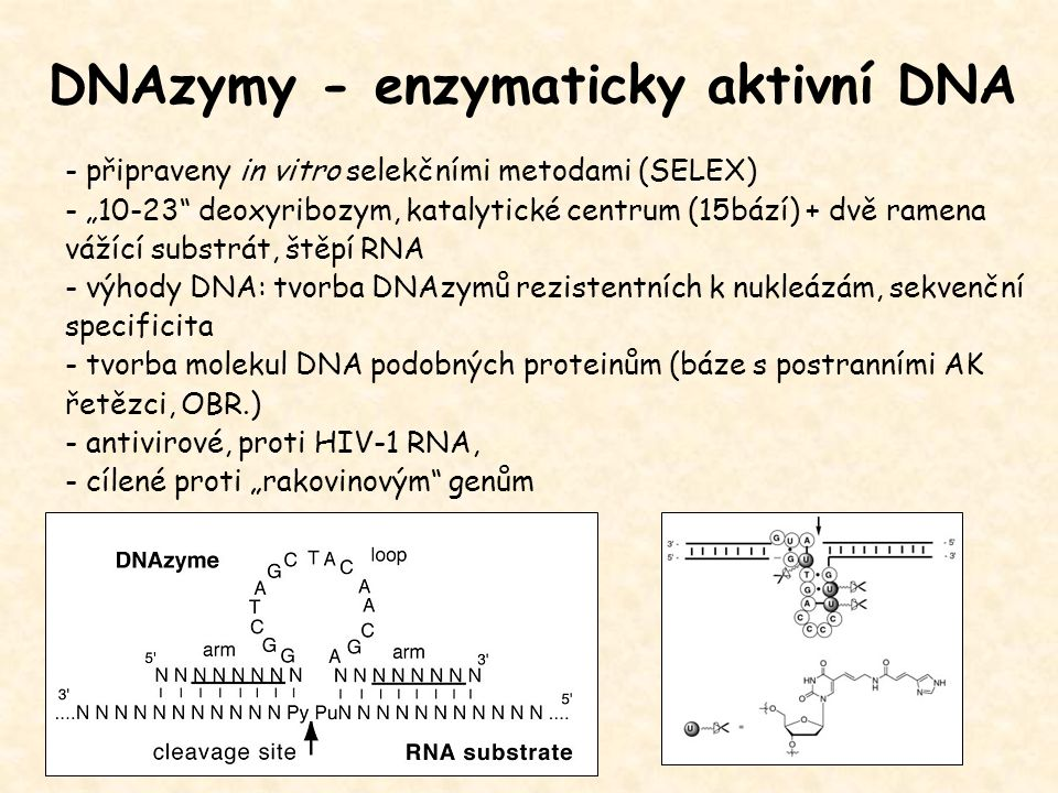 DNAzymy - enzymaticky aktivní DNA
