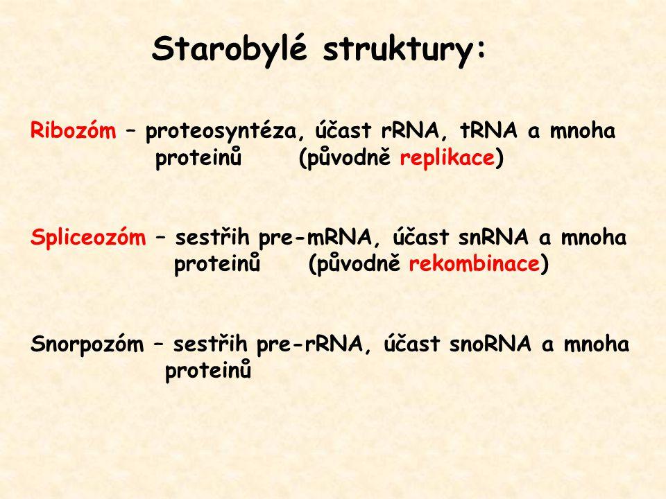 Starobylé struktury: Ribozóm – proteosyntéza, účast rRNA, tRNA a mnoha