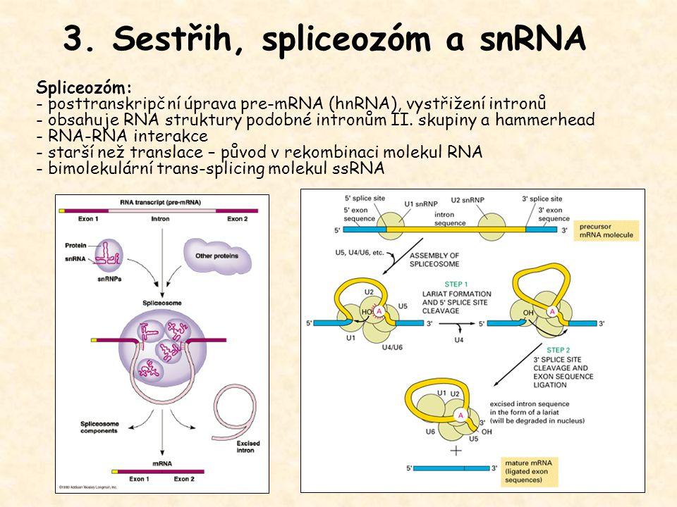 3. Sestřih, spliceozóm a snRNA